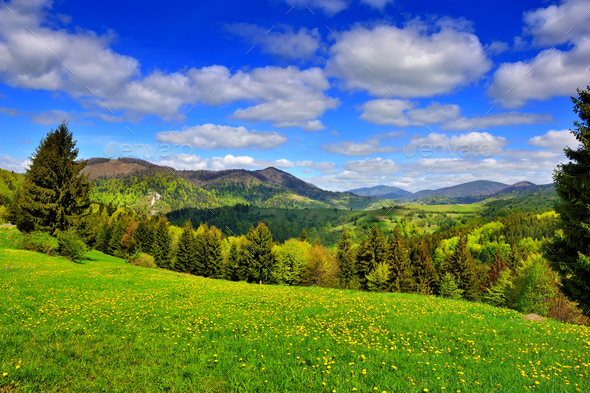 Mountain landscape with fresh green grass and dandelions near th - Stock Photo - Images