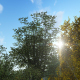 Tree And Sun Landscape - VideoHive Item for Sale
