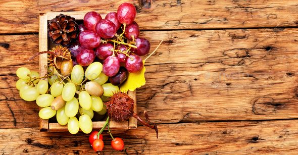 Bunches of fresh grapes - Stock Photo - Images