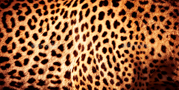 Beautiful leopard skin background - Stock Photo - Images