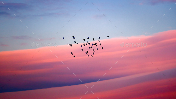 Birds migration - Stock Photo - Images