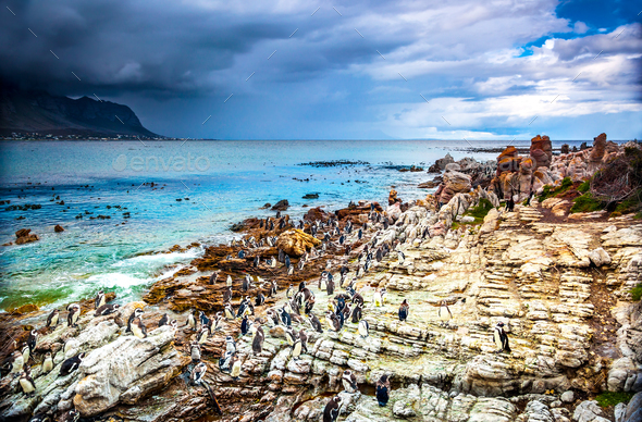 Amazing landscape of Betty's Bay - Stock Photo - Images