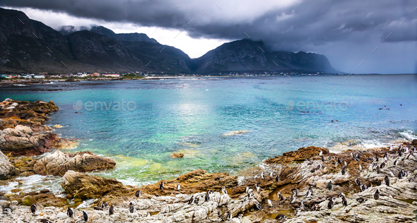 Beautiful landscape with wild penguins - Stock Photo - Images