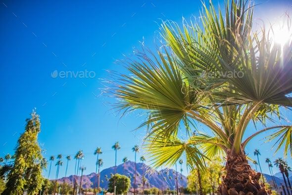 Coachella Valley Vegetation - Stock Photo - Images