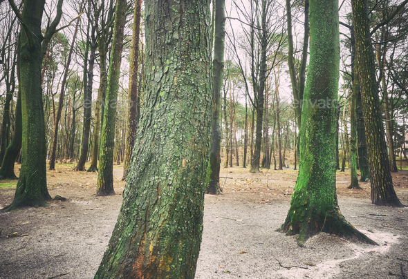 Color toned picture of trees in a park. - Stock Photo - Images