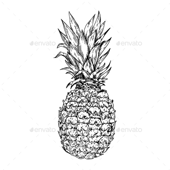GraphicRiver Pineapple Engraving Vector Illustration 21202346