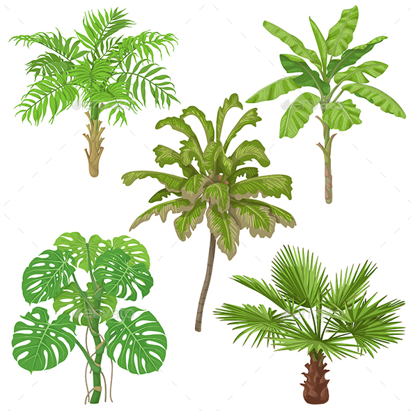 GraphicRiver Tropical Plants Isolated 21202760