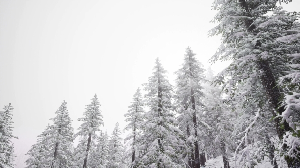 VideoHive Aerial Snow Covered Trees Landscape 21204704