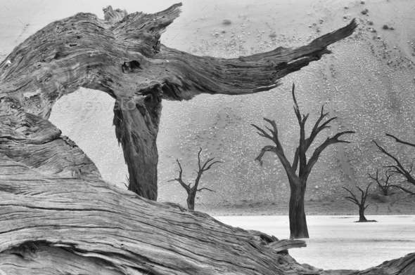 Tree skeleton at Deadvlei. Monochrome - Stock Photo - Images