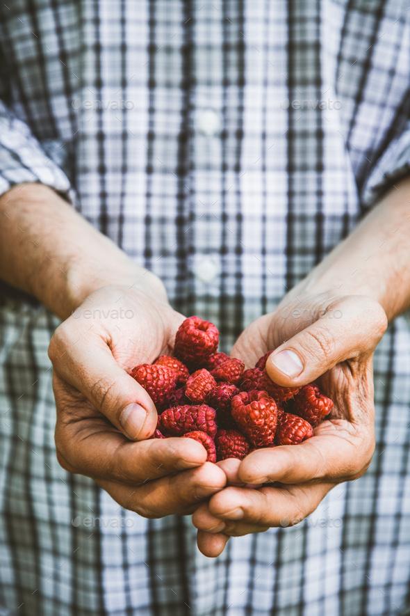 Berries - Stock Photo - Images