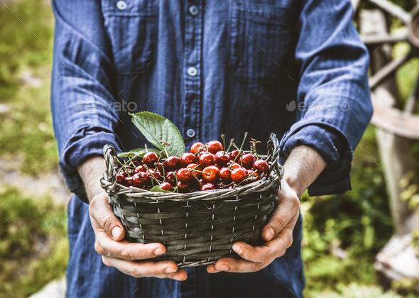 Cherries - Stock Photo - Images