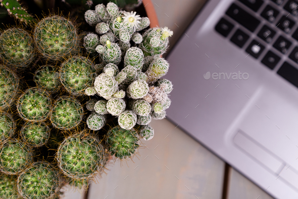 Flat lay of cactus and laptop computer - Stock Photo - Images