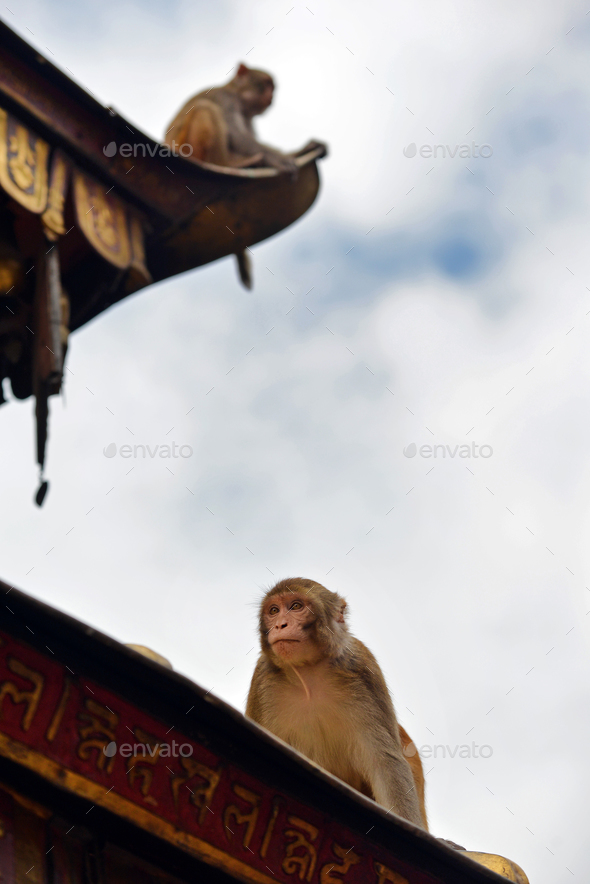 Macaque monkeys sitting on the the roof of the Swayambhunath stupa in Nepal - Stock Photo - Images