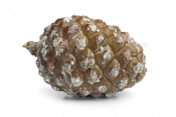 Stone pine cone - Stock Photo - Images