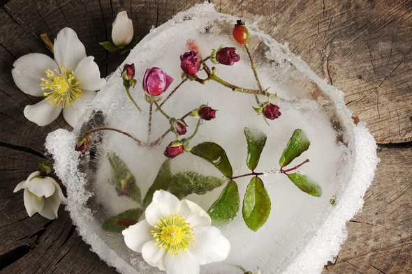 winter flowers - Stock Photo - Images