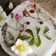 winter flowers - PhotoDune Item for Sale
