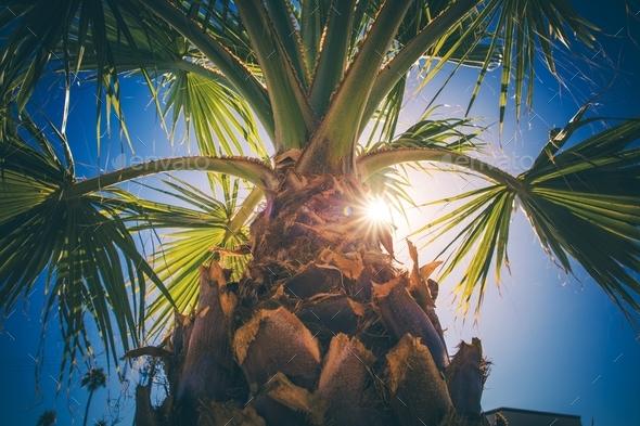Coachella Valley Palm Tree - Stock Photo - Images