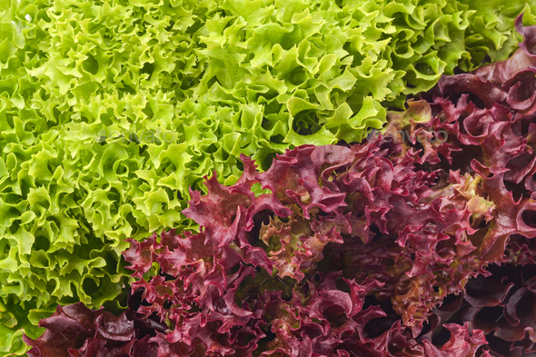 green and red salad mix - Stock Photo - Images
