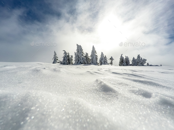 Winter white forest with snow, Christmas background - Stock Photo - Images