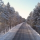 Empty Road in the Winter Forest - VideoHive Item for Sale