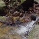 Mountain Stream with Clean Water