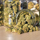 Dry and trimmed cannabis buds stored in a glas jars. - PhotoDune Item for Sale