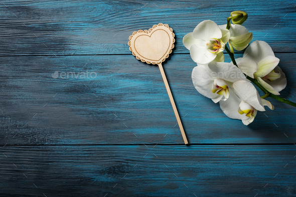 White Orchid on blue wooden background - Stock Photo - Images