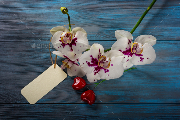 White Orchid on a wooden blue background - Stock Photo - Images