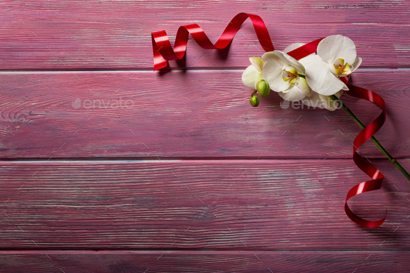White Orchid On Pink Wooden Background