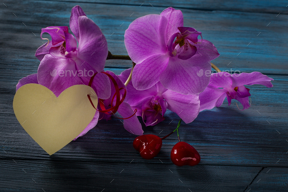 Orchid on a wooden blue background - Stock Photo - Images