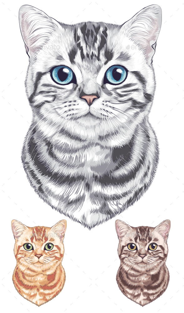 Gray Striped Cat - Animals Characters