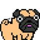 PixelsPug