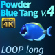Powder Blue Tang 4 - VideoHive Item for Sale