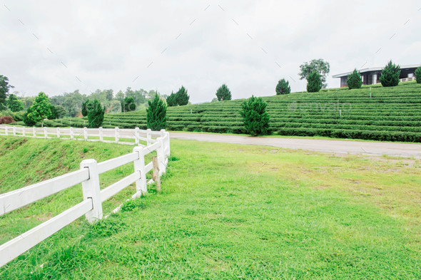 fence and lawn on tea farm - Stock Photo - Images