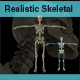 Anatomy- Complete Detail Skeleton