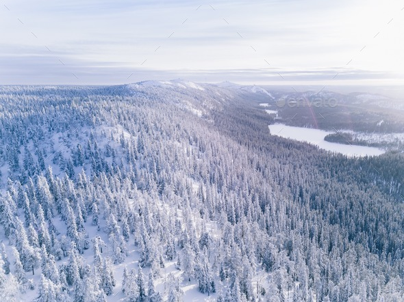 Aerial view of winter forest covered in snow. - Stock Photo - Images