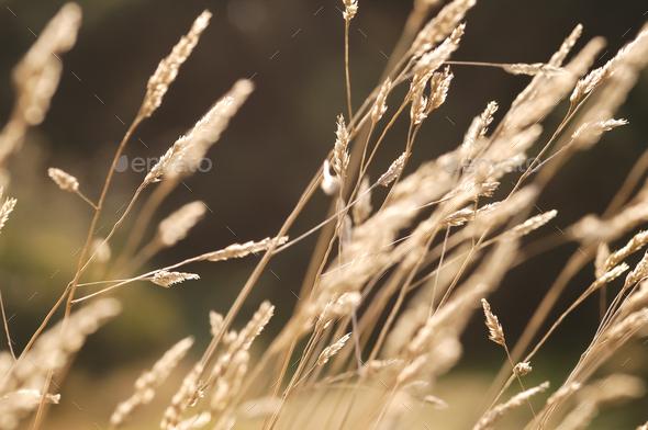 autumn grass - Stock Photo - Images