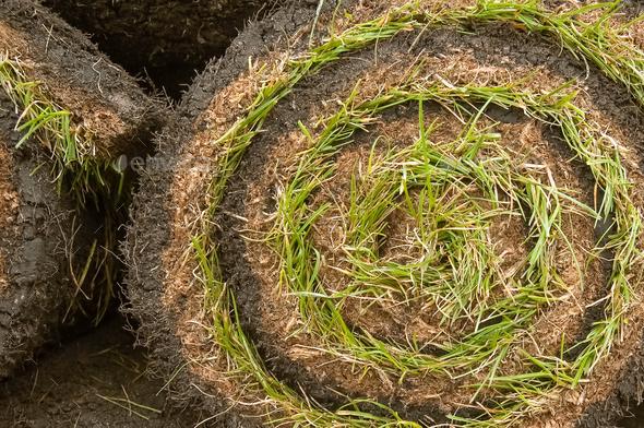 garden turf - Stock Photo - Images