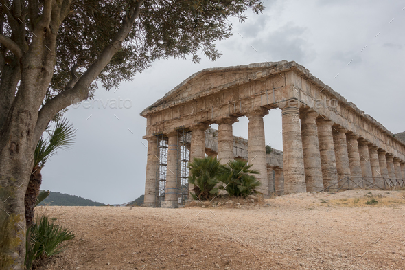 Segesta temple under an olive tree on Sicily - Stock Photo - Images