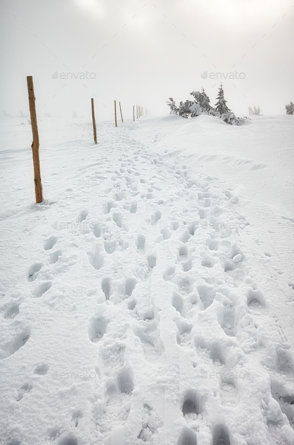 Blizzard in Karkonosze mountains, winter landscape. - Stock Photo - Images