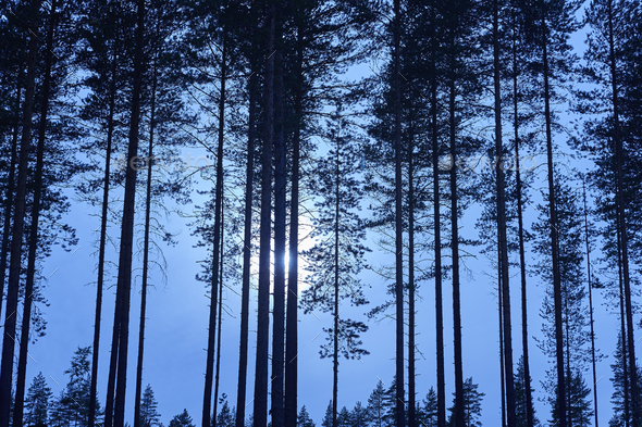 Finnish landscape with forest and moon by night. Finland environment - Stock Photo - Images