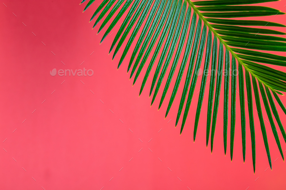 Tropical Background Palm Trees Branches. Holiday. - Stock Photo - Images