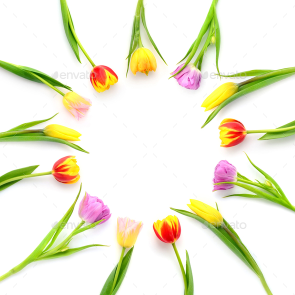 Creative arrangement of tulip flowers on white background with s - Stock Photo - Images