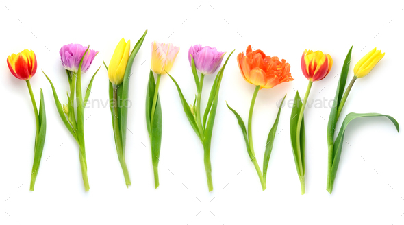 Set of different color tulips isolated on white background. Top - Stock Photo - Images