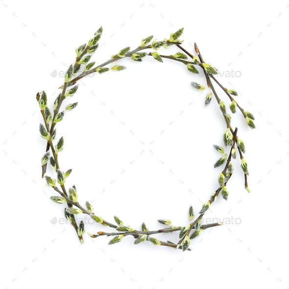 Pussy-willow branches circle frame. Decorative wreath on white b - Stock Photo - Images