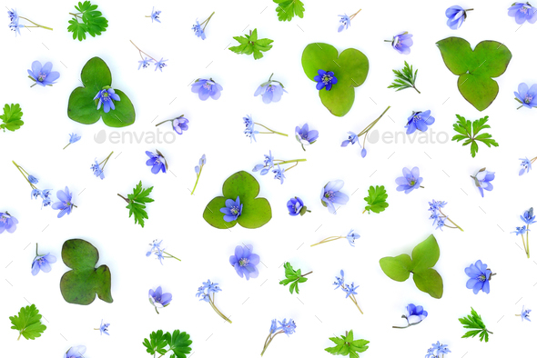 Floral pattern made of blue spring flowers, green leaves, bud on - Stock Photo - Images