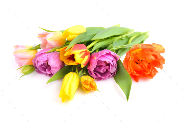 A bouquet of colored tulips on a white background - Stock Photo - Images
