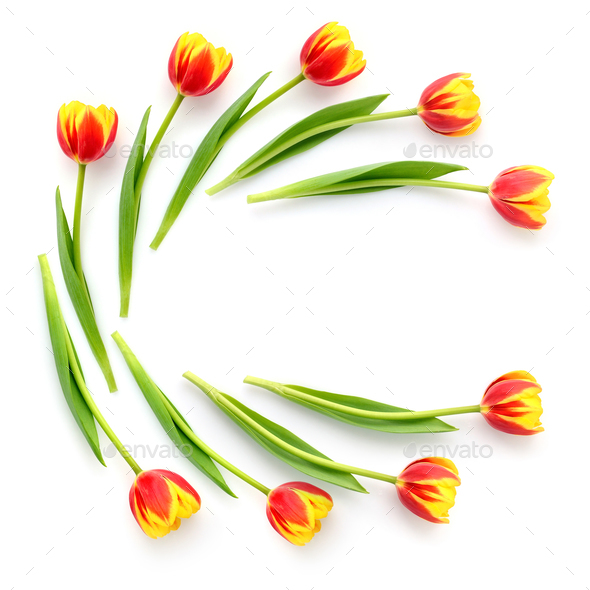Creative arrangement of tulip flowers on white background. Top v - Stock Photo - Images
