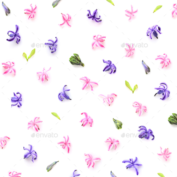 Floral pattern made of hyacinths flowers, bud on white backgroun - Stock Photo - Images