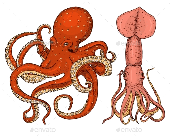 Sea Creature Octopus and Squid - Animals Characters